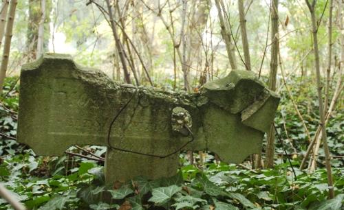 A természet lassan visszafoglalja az egykori szegedi rabtemetőt. Fotó: Frank Yvette